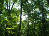 Random Treetops
