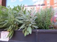 Various Herbs 2