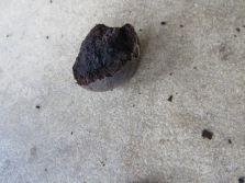 Half Shelled Walnut
