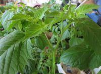 plants3