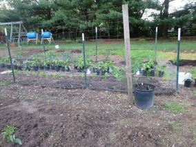 Peas, Snaps, Chard, Peppers, Tomatoes, Zucchini