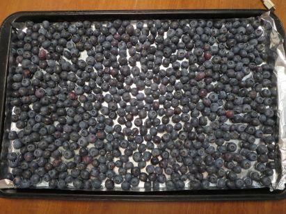 Blueberry Tray for Freezing