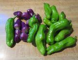 Pepperoncini Greek Hot Pepper & Purple 5-Color