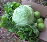 Lettuce, Cabbage, Granny Smith
